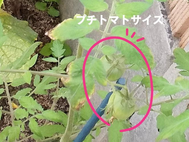 【休日の小窓】